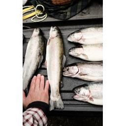 fish%20filletinf